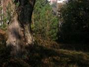 Alberi (Ph: Silvia Barlocco)