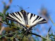 Farfalla (Ph: Vittorio Patrone)