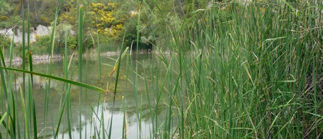 Tartaruga Emys (Ph: Provincia di Savona)