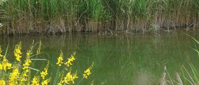 Ambiente della Tartaruga Emys (Ph: Provincia di Savona)