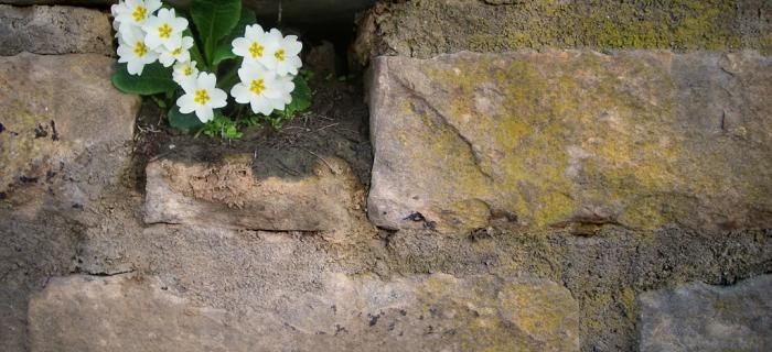 Primavera (Ph: Franco Galatolo)