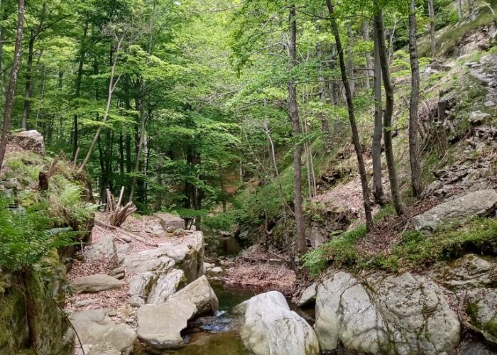 ZSC Monte Carmo - Monte Settepani (Ph: Provincia di Savona)