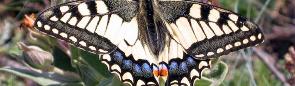 Galleria fotografica: Farfalle