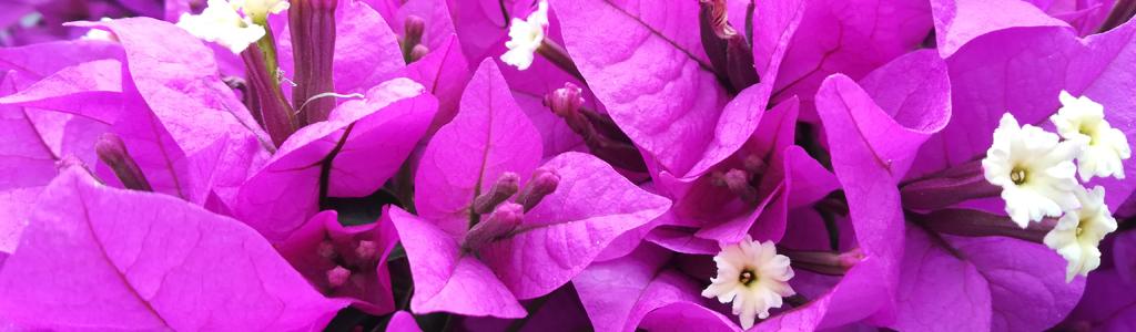 Galleria fotografica: Fiori e piante
