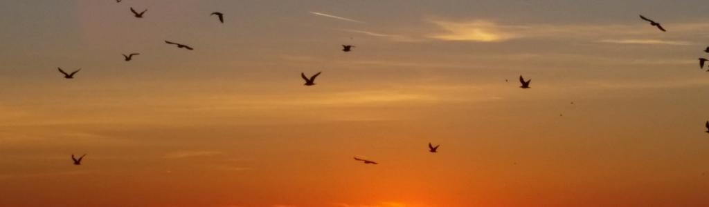 Galleria fotografica: Alba e tramonto