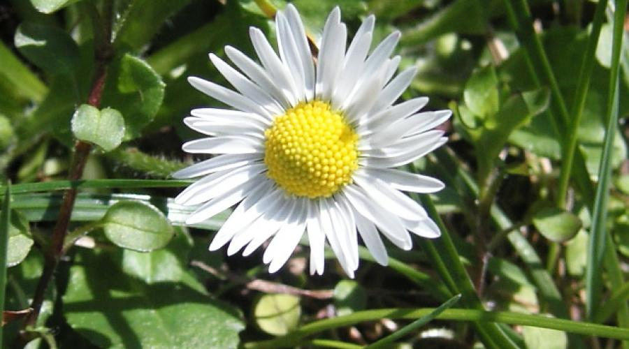 Fiore di Stella (Ph: Cristina Parente)