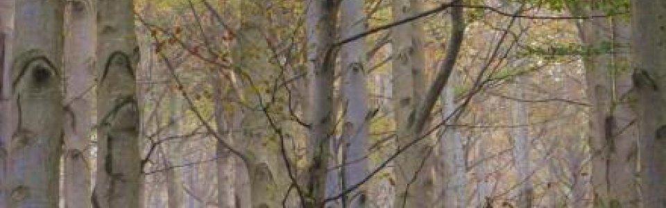 Alberi del Melogno (Ph: Giancarlo Silvestrini)