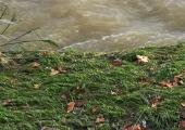 Eventi meteoclimatici eccezionali del novembre 2019, ordinanza per la gestione dell'emergenza rifiuti
